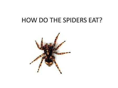HOW DO THE SPIDERS EAT?. Spiders don't chew their food. When they get to the bug in their web, they bite it and inject venom. The venom either paralyzes.