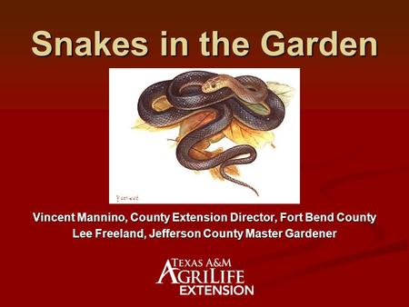 Snakes in the Garden Vincent Mannino, County Extension Director, Fort Bend County Lee Freeland, Jefferson County Master Gardener.