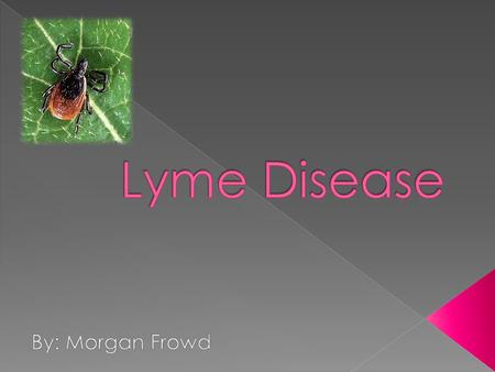 Lyme disease is a bacterial infection spread through the bite of the blacklegged tick.  Blacklegged ticks carry these bacteria. The ticks pick up the.