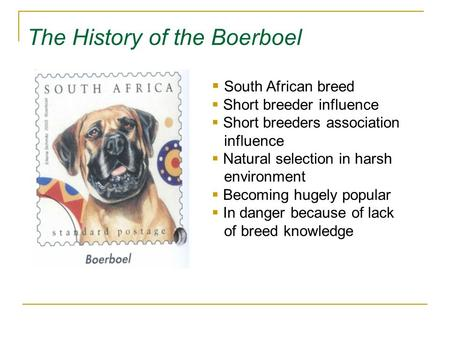 The History of the Boerboel  South African breed  Short breeder influence  Short breeders association influence  Natural selection in harsh environment.