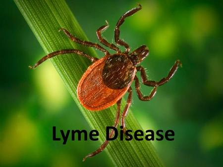 Lyme Disease. What is Lyme Disease? Also known as borreliosis Caused by Borrelia burgdorferi bacteria Bacteria live in the host which is a tick.