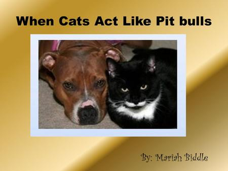When Cats Act Like Pit bulls By: Mariah Biddle When Cats Act Like Pit bulls By: Mariah Biddle.