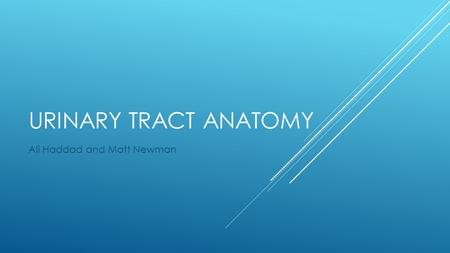 URINARY TRACT ANATOMY Ali Haddad and Matt Newman.