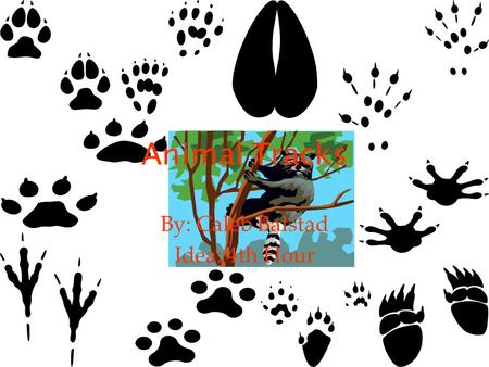 Animal Tracks By: Caleb Balstad Idea: 4th Hour. FACTS A gait is the pattern in which an animal walks. Tracks can be found near water sources and near.