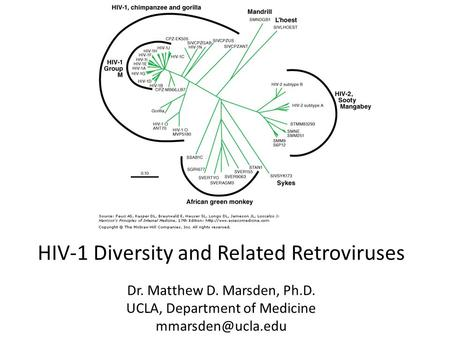 HIV-1 Diversity and Related Retroviruses Dr. Matthew D. Marsden, Ph.D. UCLA, Department of Medicine