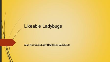 Likeable Ladybugs Also Known as Lady Beetles or Ladybirds.