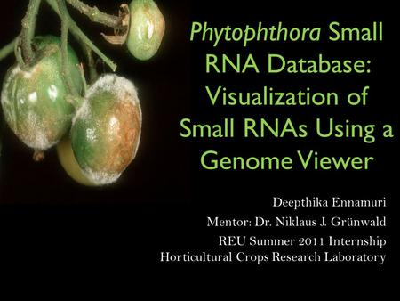 Phytophthora Small RNA Database: Visualization of Small RNAs Using a Genome Viewer Deepthika Ennamuri Mentor: Dr. Niklaus J. Grünwald REU Summer 2011 Internship.