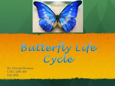 By: Christal Hudson LTEC 4100.003 Fall 2010. Learning Objectives Students will understand the life cycle of butterflies Students will understand the life.