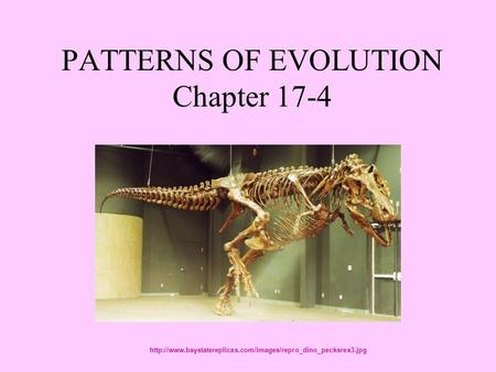 PATTERNS OF EVOLUTION Chapter 17-4