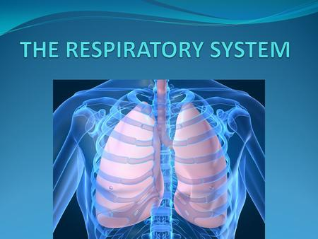 The respiratory system consists of the lungs and air passages. It is responsible for taking in oxygen, a gas needed by all body cells and removing carbon.
