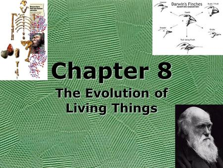 The Evolution of Living Things