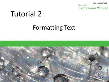 Tutorial 2: Formatting Text. Objectives Session 2.1 – Learn the functions of the Common toolbar – Change the size of text – Discern which fonts to use.