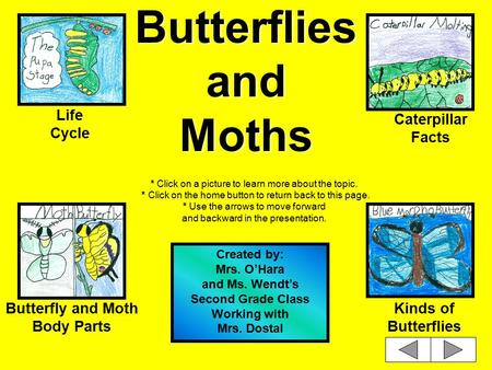 Butterflies and Moths * Click on a picture to learn more about the topic. * Click on the home button to return back to this page. * Use the arrows to.