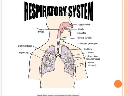 External respiration-it moves oxygen from lungs to blood, then Carbon dioxide moves from the blood into our lungs Internal respiration-oxygen moves from.
