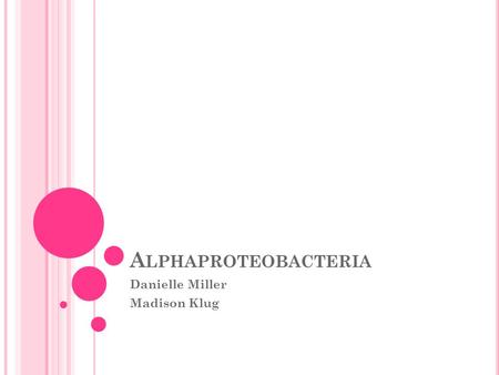 A LPHAPROTEOBACTERIA Danielle Miller Madison Klug.