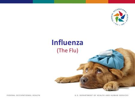 Influenza (The Flu). Influenza Virus The influenza virus affects the respiratory system. Most people's immune systems will be able to handle the virus.