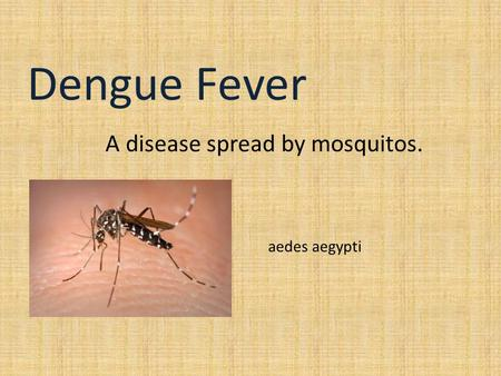 Dengue Fever A disease spread by mosquitos. aedes aegypti.
