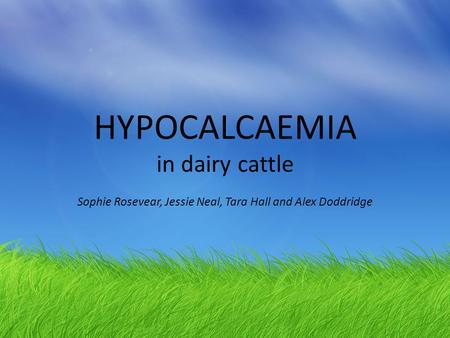 HYPOCALCAEMIA in dairy cattle Sophie Rosevear, Jessie Neal, Tara Hall and Alex Doddridge.