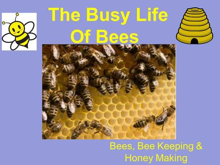 The Busy Life Of Bees Bees, Bee Keeping & Honey Making.