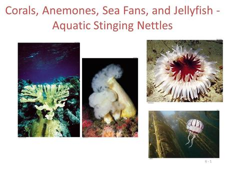 Corals, Anemones, Sea Fans, and Jellyfish - Aquatic Stinging Nettles