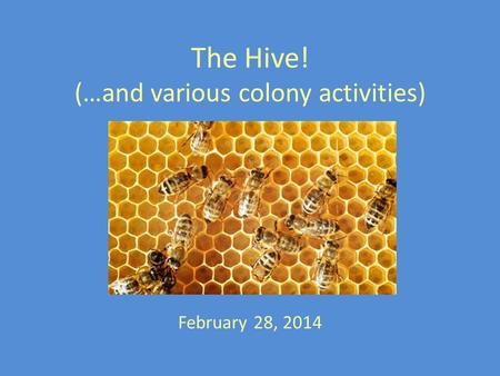 The Hive! (…and various colony activities) February 28, 2014.