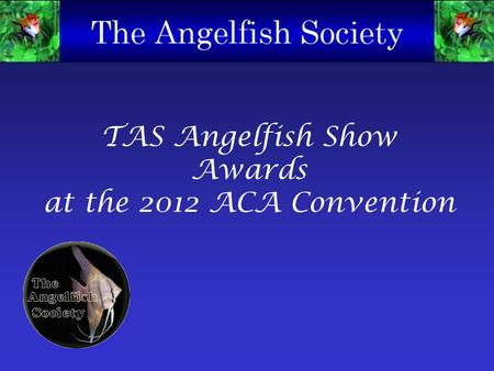 TAS Angelfish Show Awards at the 2012 ACA Convention.