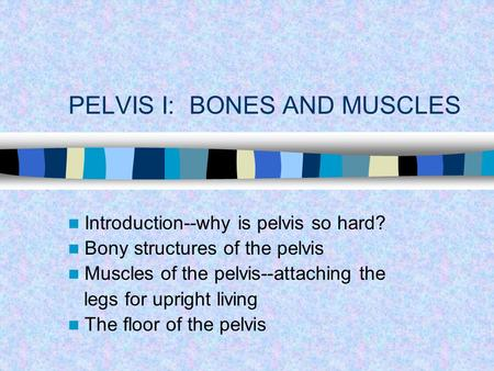 PELVIS I: BONES AND MUSCLES Introduction--why is pelvis so hard? Bony structures of the pelvis Muscles of the pelvis--attaching the legs for upright living.