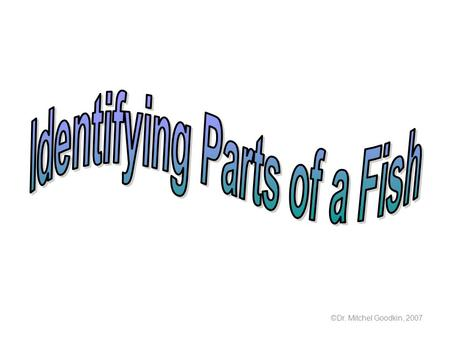 ©Dr. Mitchel Goodkin, 2007. Draw and label the parts of a fish.