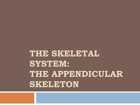 THE SKELETAL SYSTEM: THE APPENDICULAR SKELETON. The Pectoral Girdle (Shoulder)  2 pectoral girdles  attach bones of upper limbs to axial skeleton 