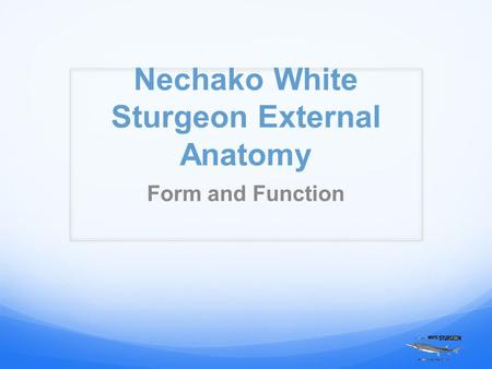 Nechako White Sturgeon External Anatomy Form and Function.