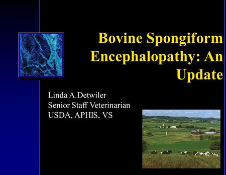 """an overview of the bovine spongiform encephalopathy mad cow disease An 11-year-old cow in alabama tested positive for an """"atypical"""" strain of the prion  disease bovine spongiform encephalopathy (bse), also."""