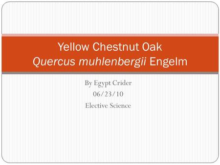 By Egypt Crider 06/23/10 Elective Science Yellow Chestnut Oak Quercus muhlenbergii Engelm.