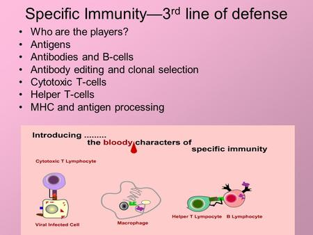 Specific Immunity—3 rd line of defense Who are the players? Antigens Antibodies and B-cells Antibody editing and clonal selection Cytotoxic T-cells Helper.