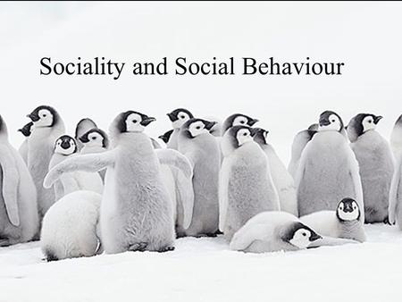 Sociality and Social Behaviour. Level of Sociality Mating strategy Communication System Kin Selection Altruism Predator Pressure Resource Defence Parental.