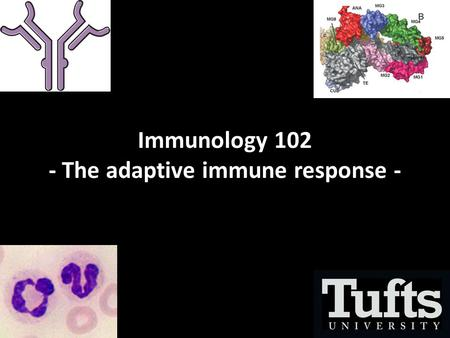 Immunology 102 - The adaptive immune response -. Overview.