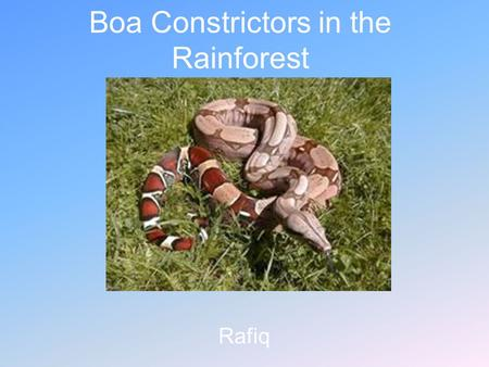Boa Constrictors in the Rainforest Rafiq. Introduction The rainforests of the world are important to us and animals. Rainforest are located in southern.