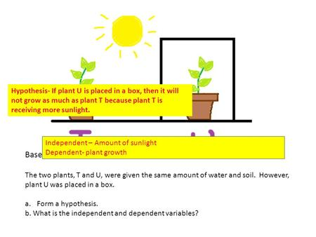 Base your answers on the picture and the information below. The two plants, T and U, were given the same amount of water and soil. However, plant U was.