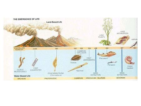 Summary of Events Fossil Record Fossils Most found in marine sedimentary rock Three requirements: 1) need hard parts, e.g., shell, bone, teeth,
