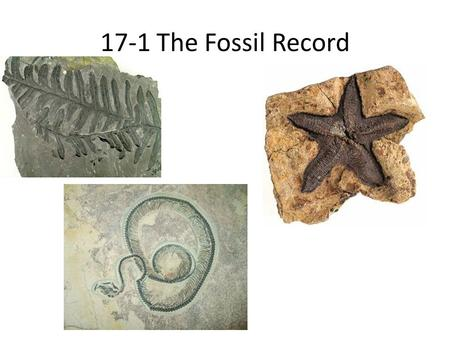 17-1 The Fossil Record. A fossil is defined as any evidence of life that existed long ago. A fossil can be a plant, an animal, a footprint, an egg, a.