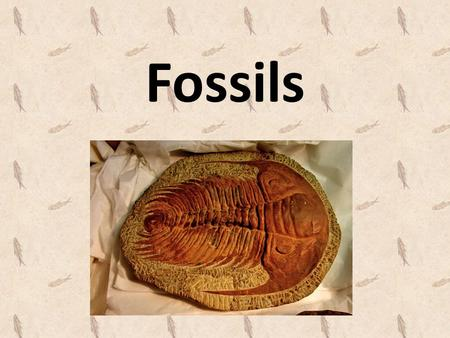Fossils. What are fossils? Fossils - the preserved remains or traces of animals, plants, and other organisms that lived long ago. When an organism dies,