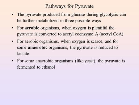 Pathways for Pyruvate The pyruvate produced from glucose during glycolysis can be further metabolized in three possible ways For aerobic organisms, when.