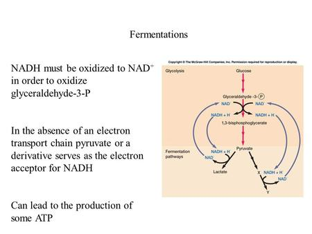 Fermentations NADH must be oxidized to NAD + in order to oxidize glyceraldehyde-3-P In the absence of an electron transport chain pyruvate or a derivative.