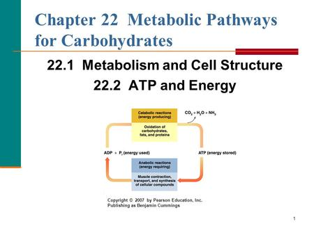 Chapter 22 Metabolic Pathways for Carbohydrates