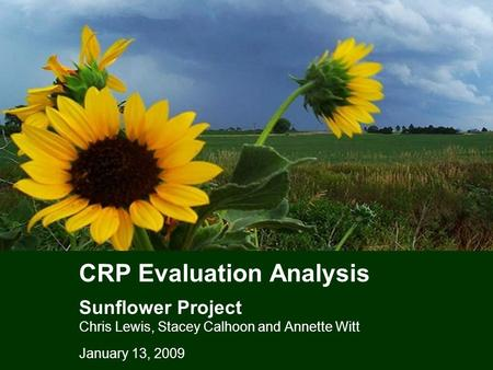 CRP Evaluation Analysis Sunflower Project Chris Lewis, Stacey Calhoon and Annette Witt January 13, 2009.