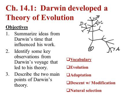 Ch. 14.1: Darwin developed a Theory of Evolution Objectives 1.Summarize ideas from Darwin's time that influenced his work. 2.Identify some key observations.