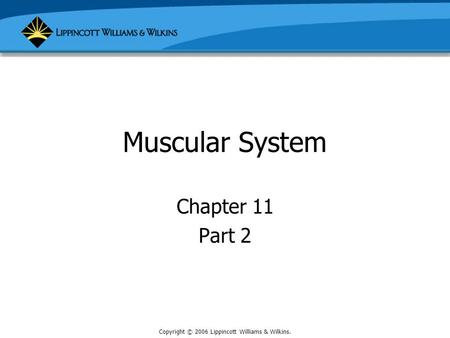 Copyright © 2006 Lippincott Williams & Wilkins. Muscular System Chapter 11 Part 2.