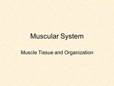 Muscle Tissue and Organization