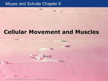 Moyes and Schulte Chapter 6 Copyright © 2005 Pearson Education, Inc., publishing as Benjamin Cummings Cellular Movement and Muscles.