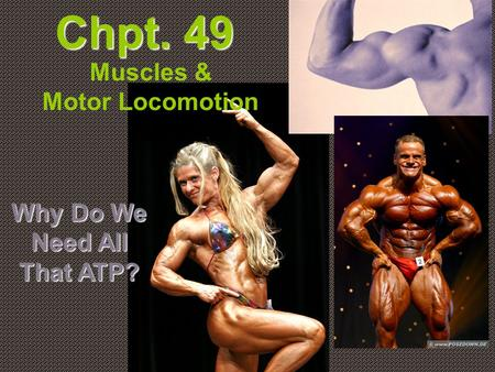Chpt. 49 Muscles & Motor Locomotion Why Do We Need All That ATP?