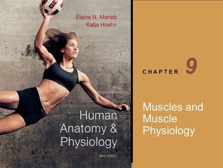 9 Muscles and Muscle Physiology.